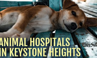 Animal Hospitals in Keystone Heights