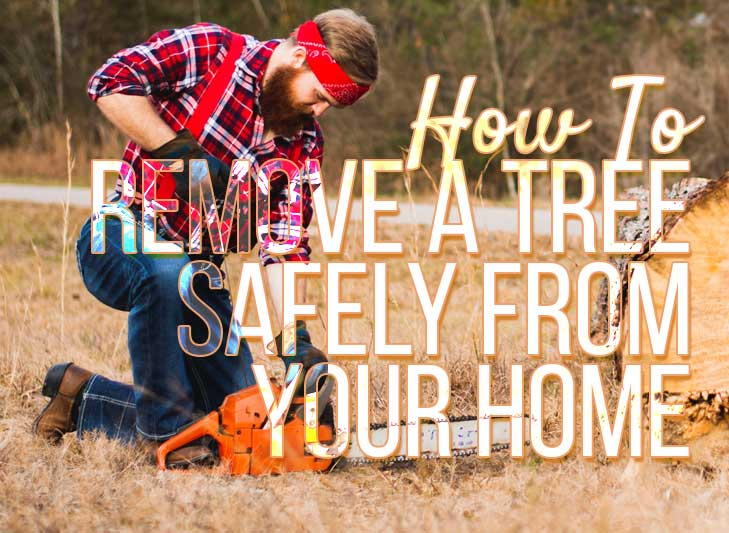how to cut a tree, remove a tree at home